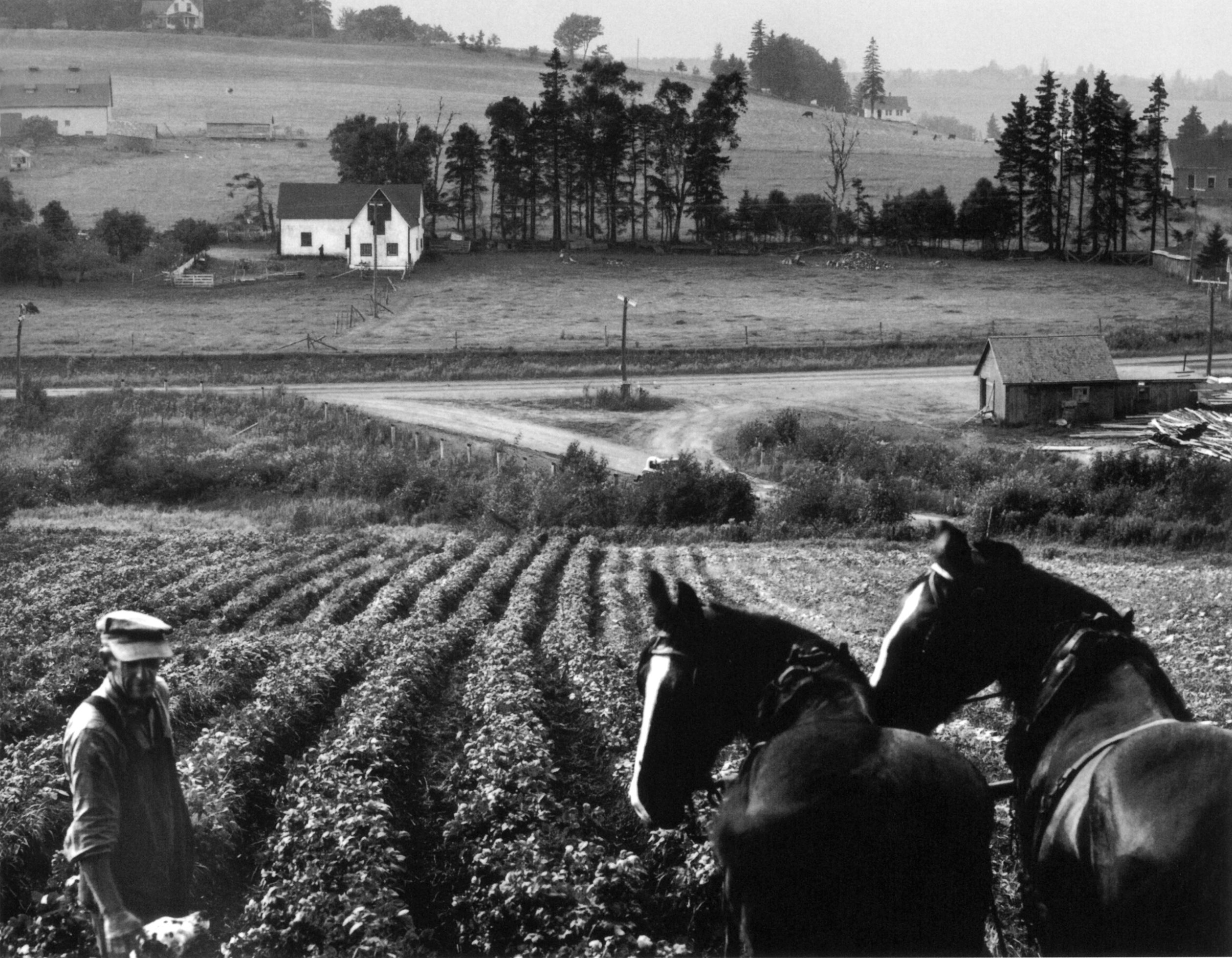 Horses and Farmer